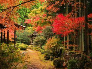 1200年のパワーを感じに!歴史を紡ぐ京都の美しい古寺