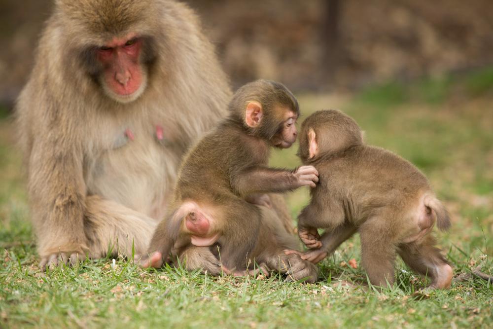 重復接連不斷?在嵐山和那些可愛的野生動物接觸吧