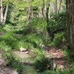 숲에서 좋은 기운을 얻어 가는 교토 대표 파워스팟