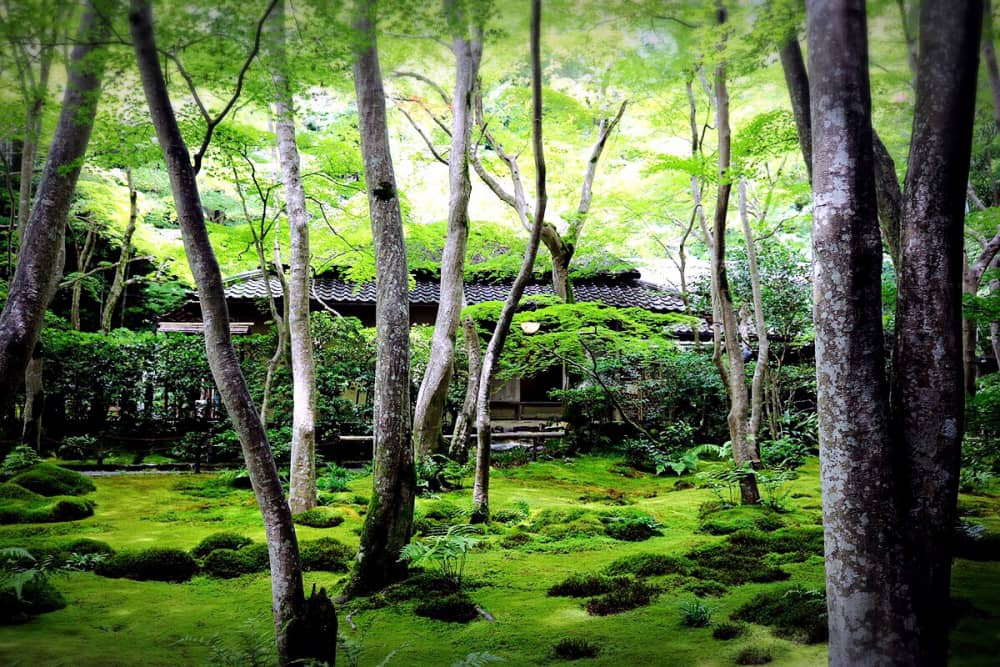 Experience a World in Green in the Japanese garden of Gioji.