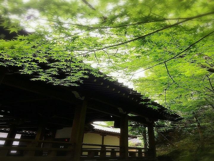 사시사철 아름다움을 뽐내는 단풍나무 3천여그루 「젠린지 에이칸도」