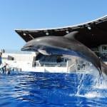 近在京都站附近,能和海洋和河川裏的生物們相遇「京都水族館」