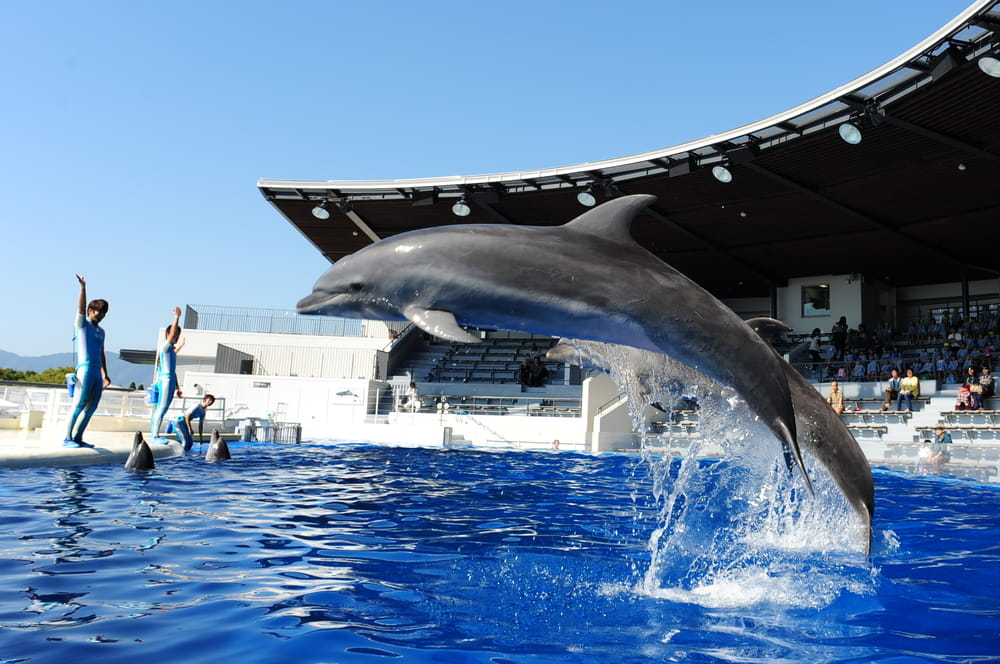 Visit sea animals close to Kyoto Station at Kyoto aquarium