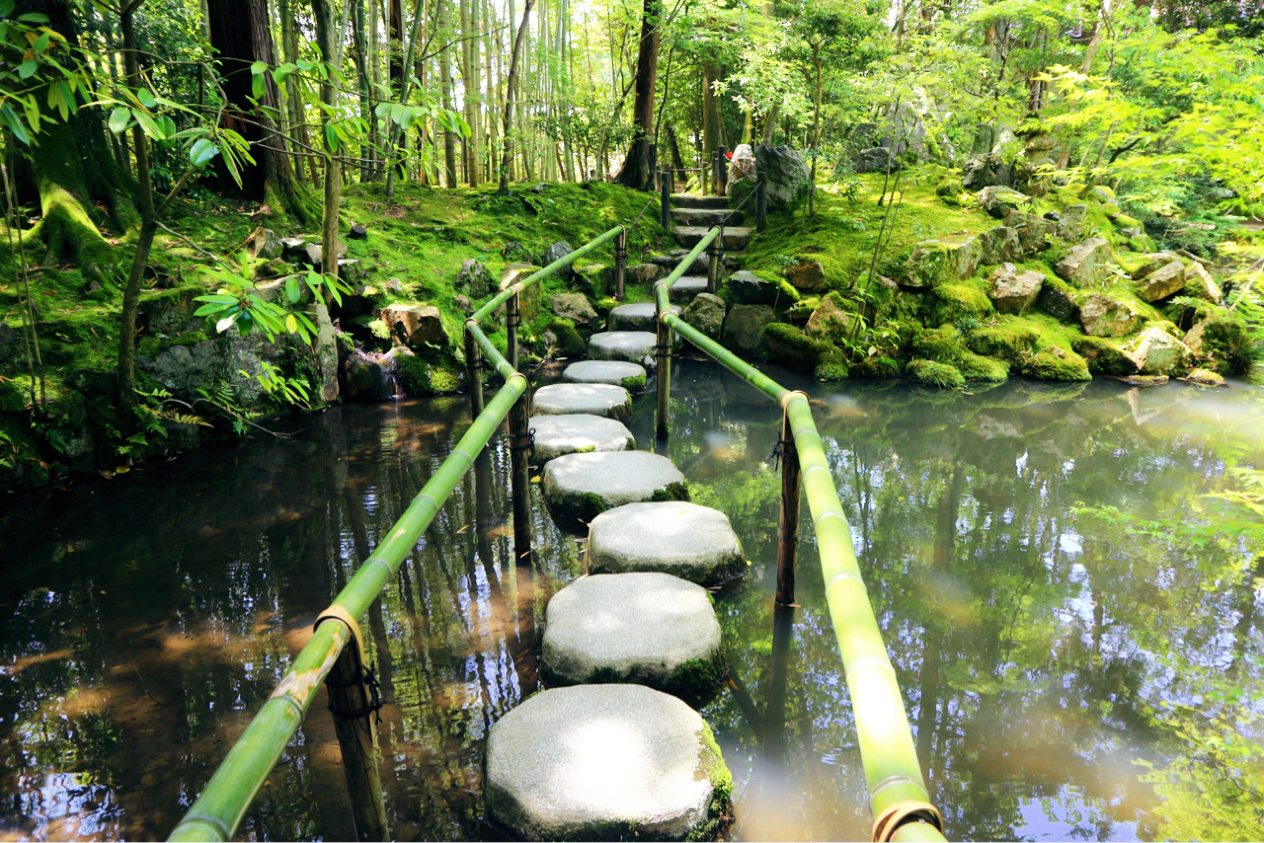 Tenju-an: a garden full of life and water