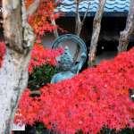 春夏秋冬可以在這一年中感受不同季節帶來的色彩「退蔵院」
