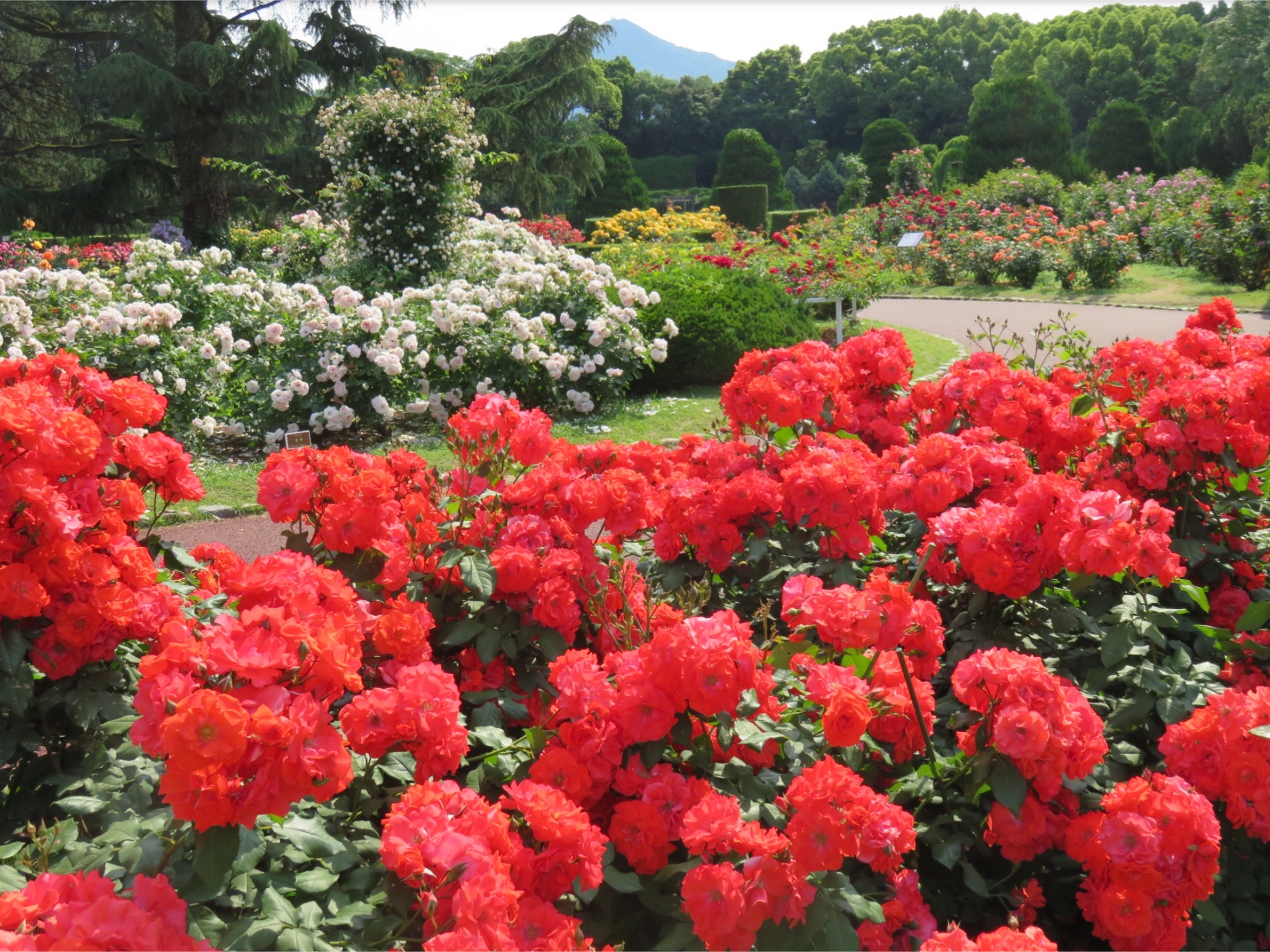 "Enjoying the colors of the seasons with vibrant and lively plants ""Kyoto Botanical Gardens"""