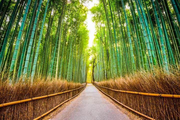 絶対に訪れたい、荘厳な雰囲気の中で優雅さや趣を感じる「竹林の小径」