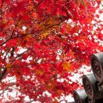 교토의 단풍 명소 5선! 가을의 교토에서 잊을 수없는 단풍의 풍경을 만나세요