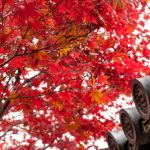 5 Unforgettable Autumn Leaf Spots in Kyoto!
