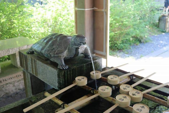 神社内に幸運の亀がいっぱい