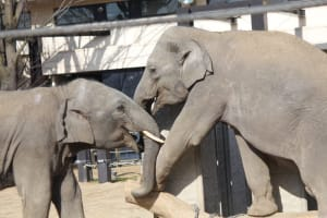 Enjoy watching the animals in close-up at Kyoto City Zoo