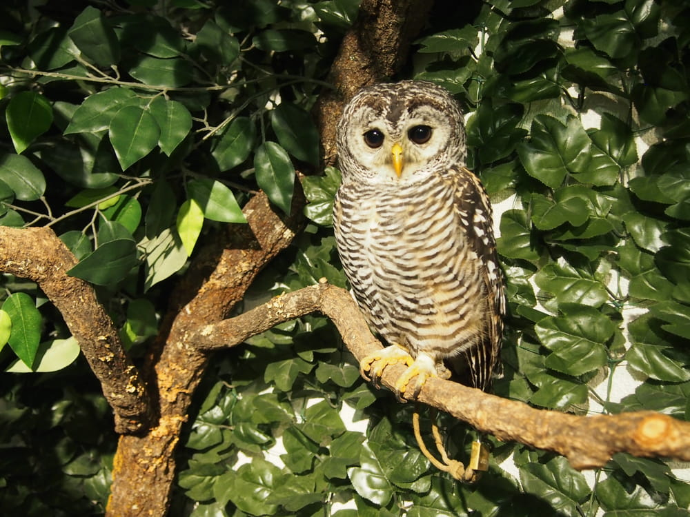 Interact with owls at Kyoto Owl's Forest Zoo