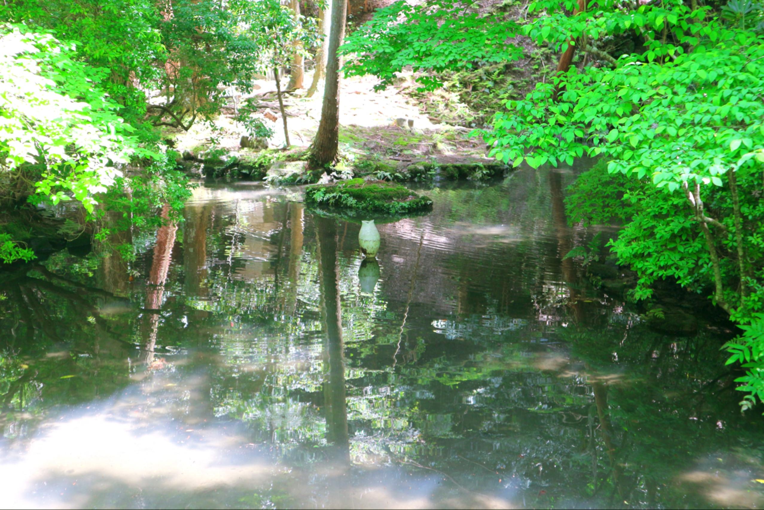 映入眼簾的碧綠水面