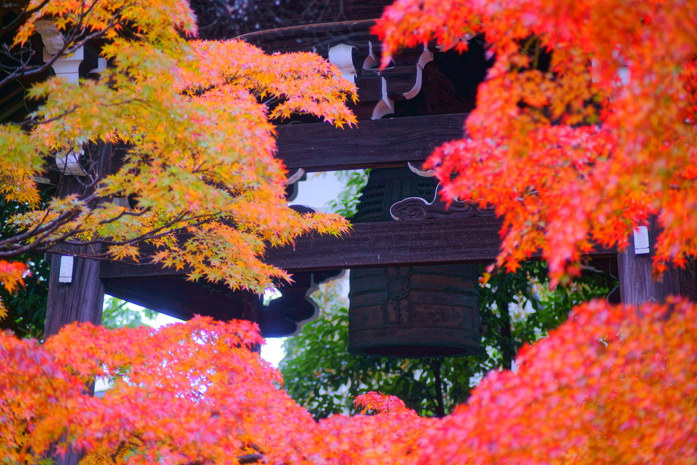 Wonderful Red Maples by Bell Tower