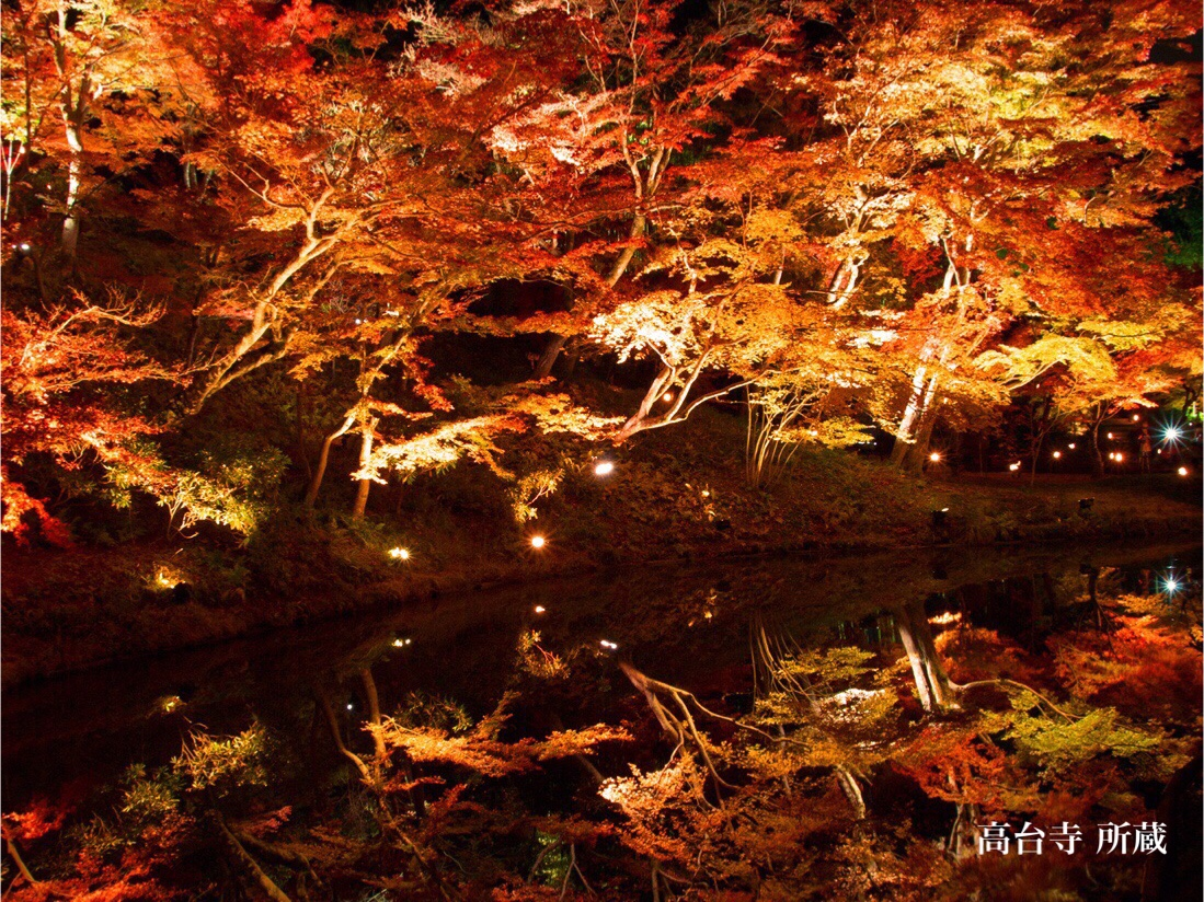 Magnificent red maples like fire