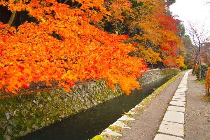 鮮やかな紅葉の小径