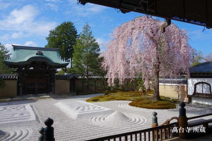 桜咲く庭の贅沢な美しさの春