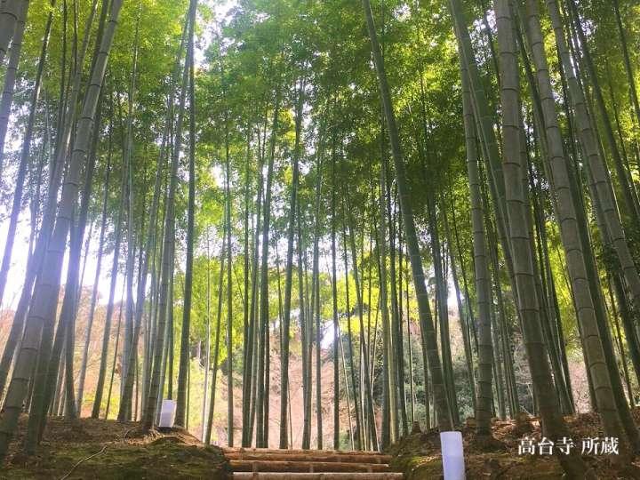 清涼感漂う竹林への誘い