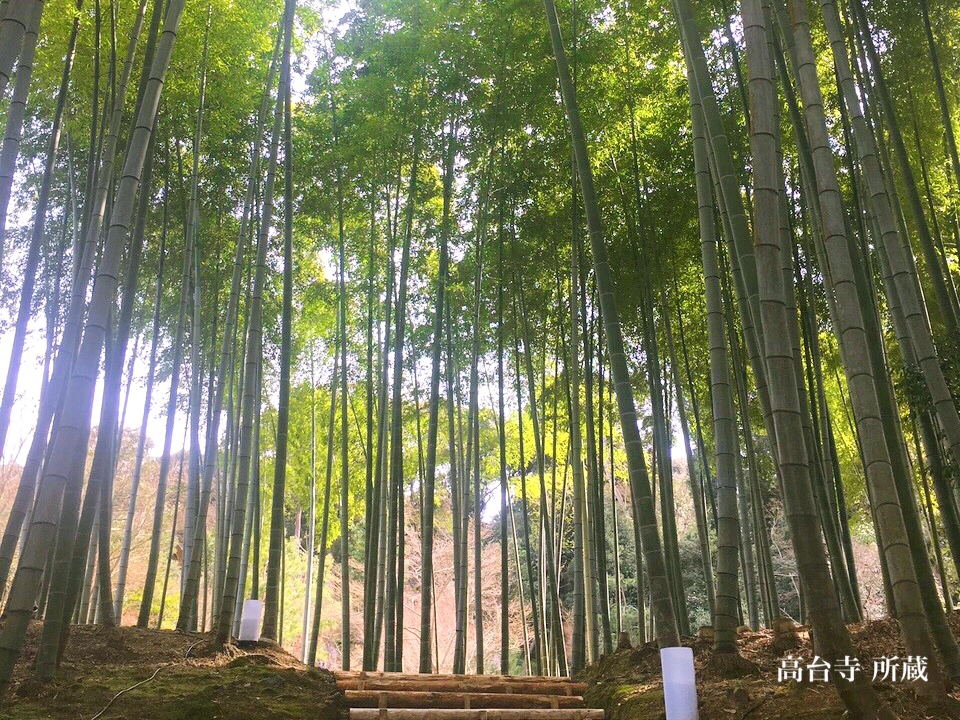 Invitation to the fresh bamboo forest