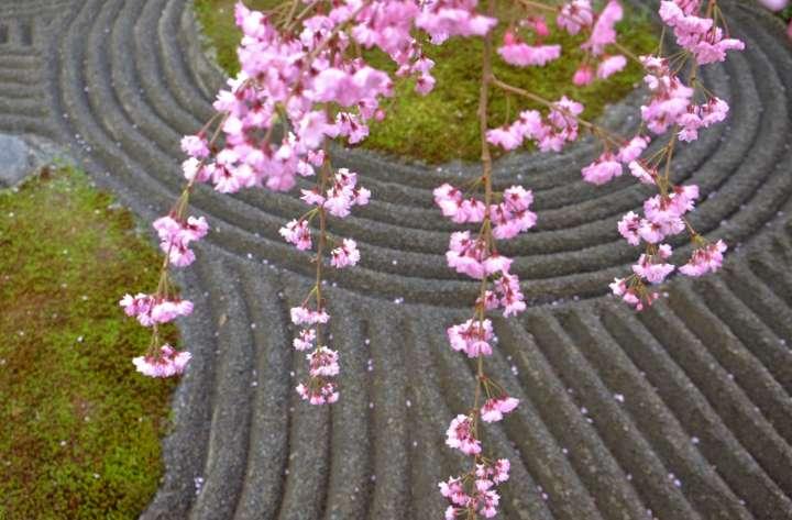 降り注ぐ桜色が楽しみな春