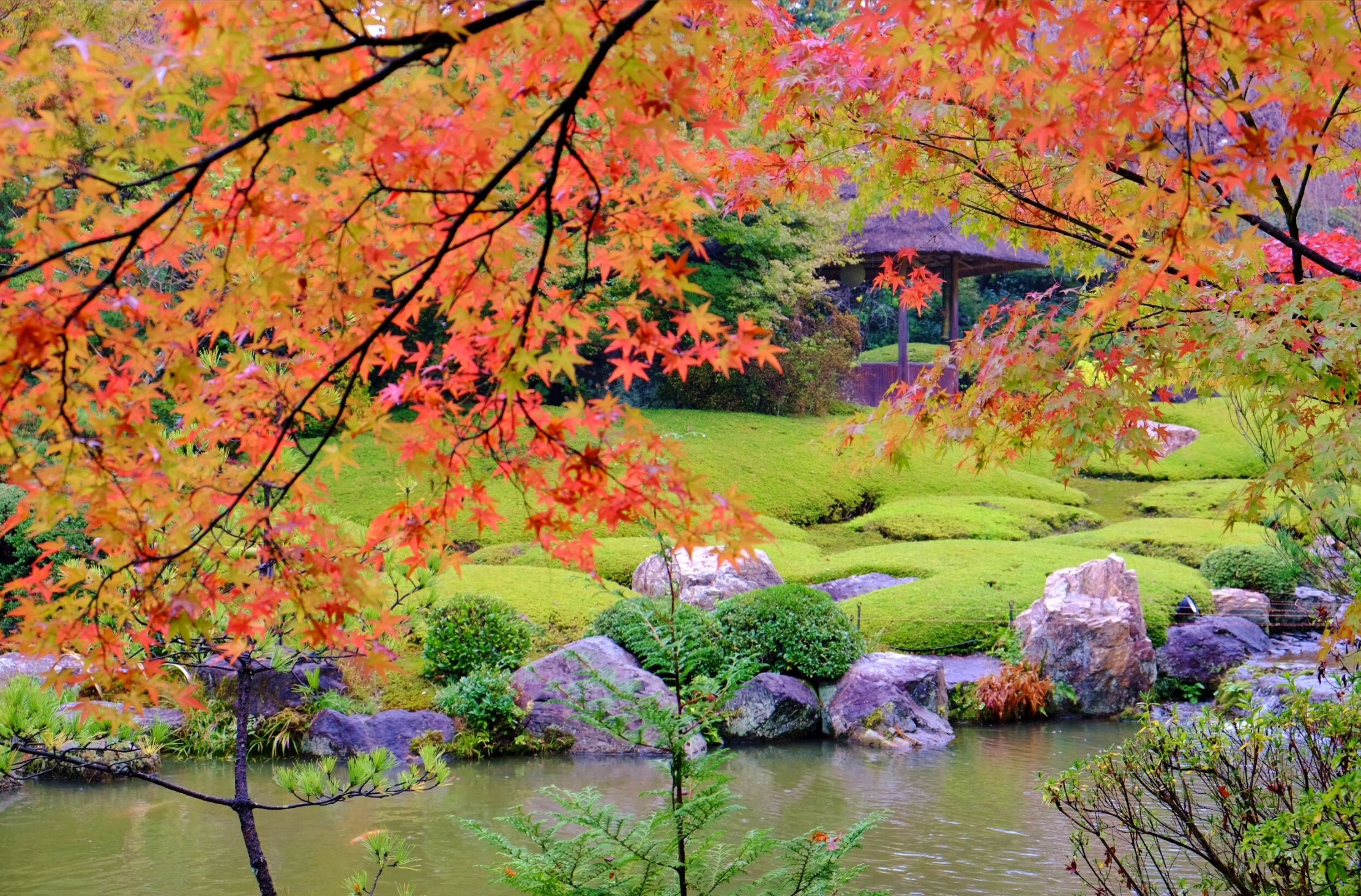 Walk in autumn colored garden