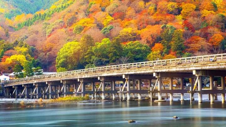 カラフルな秋の色づき