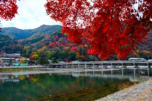 Begin your Kyoto trip from here- Togetsukyo bridge where you can enjoy the view throughout the year