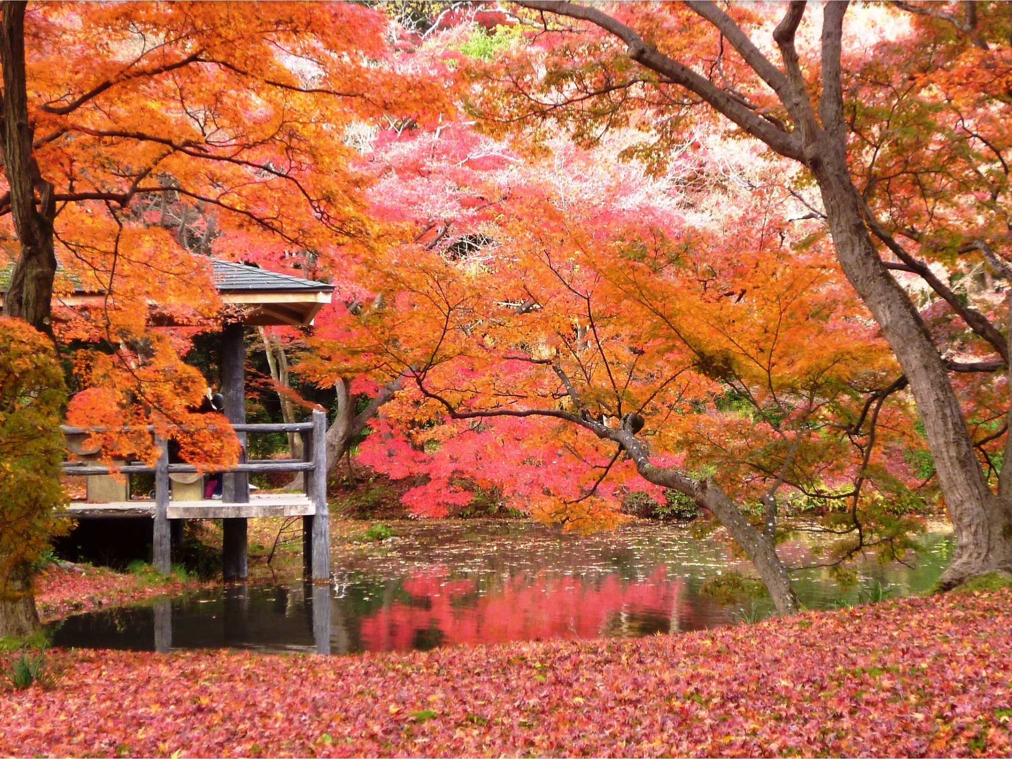 A little-known place for viewing autumn leaves