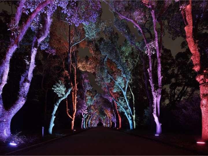 幻想の森へようこそ