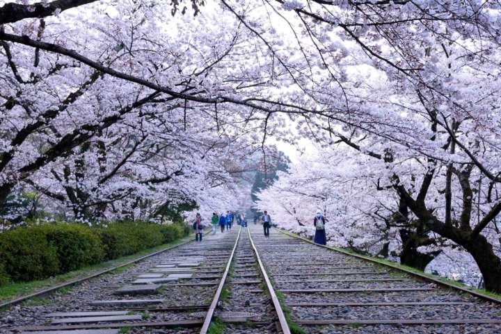 辺り一面が桜色に染まる季節
