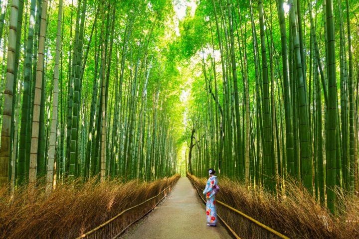 圧巻の光景広がる竹林