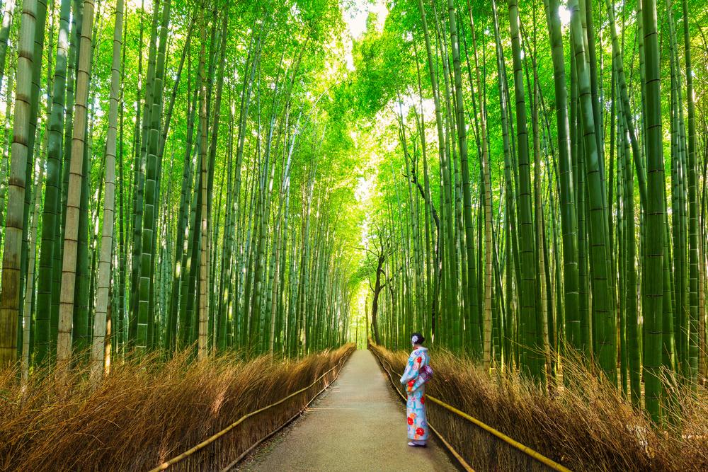 壮观的竹林风景