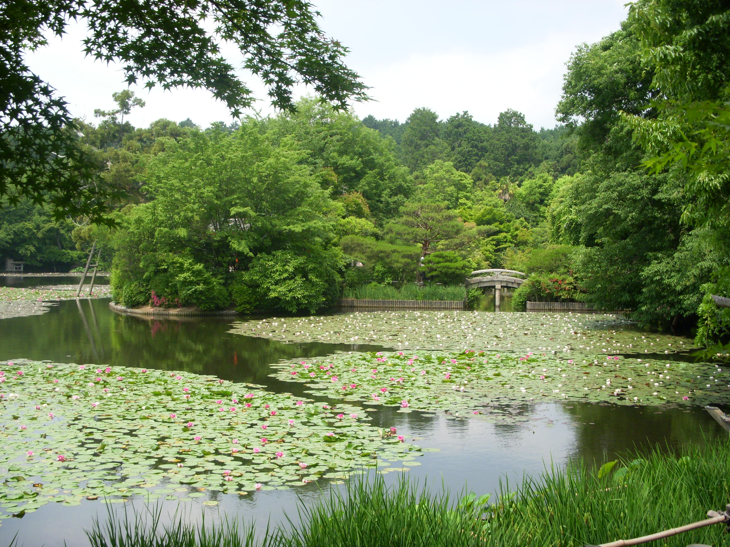 Kyoyochi 'Mirror' Pond