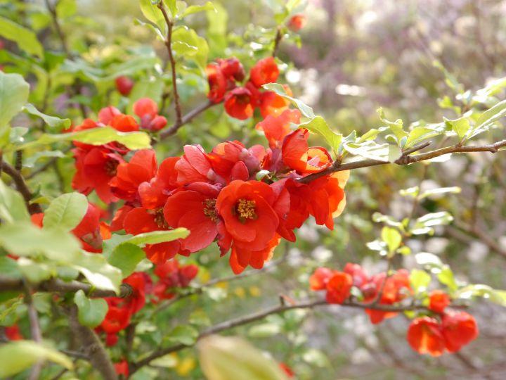 하라다니원の桜