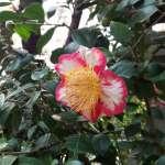 雨宝院の桜