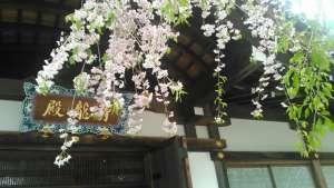 将軍塚青龍殿の桜