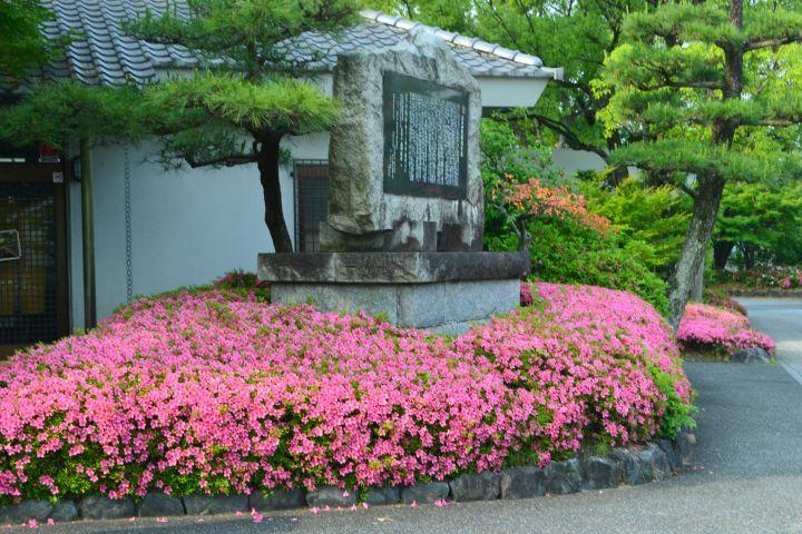 智积院の桜