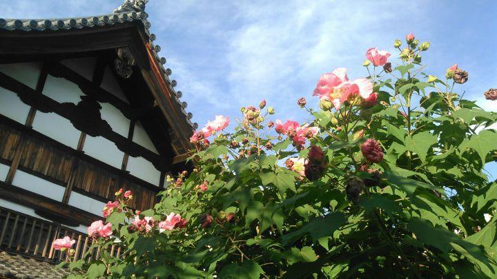 天寧寺の桜
