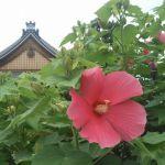 妙蓮寺の桜