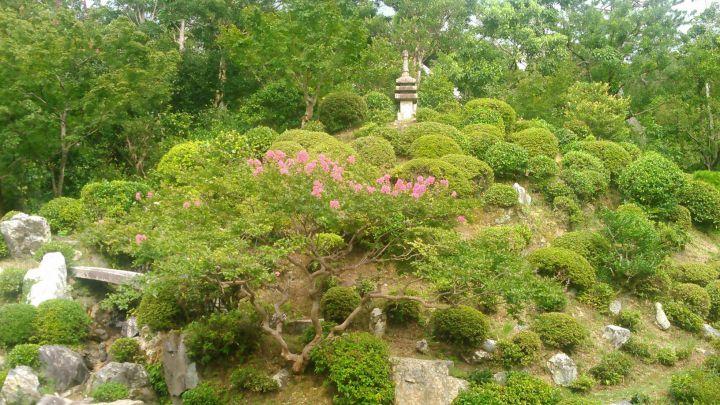 智積院の桜