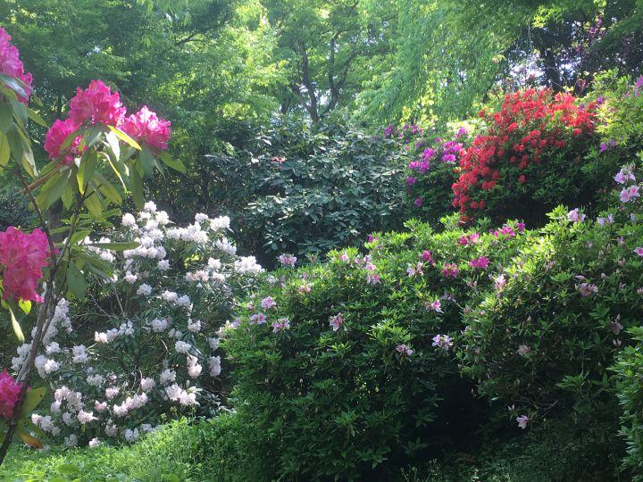 텐류지の桜