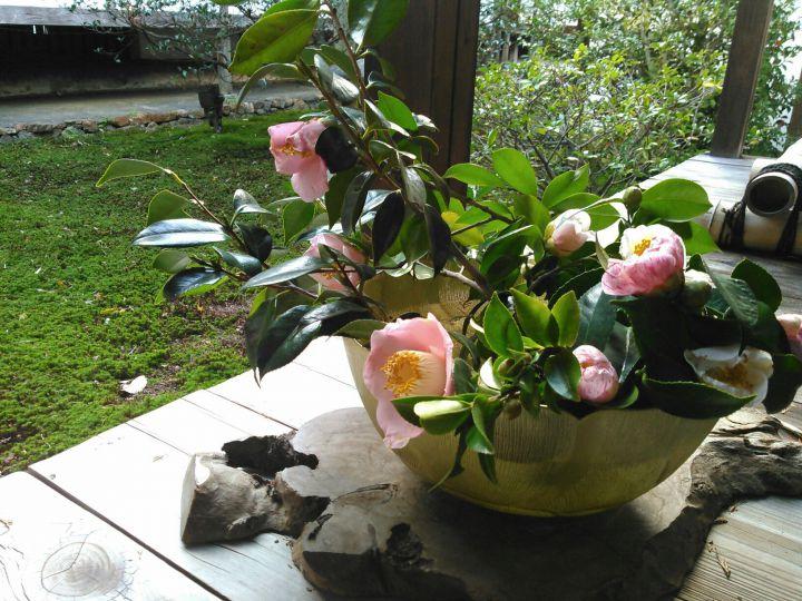 雲龍院の桜