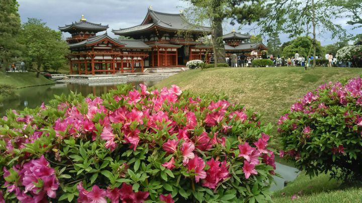 平等院の桜