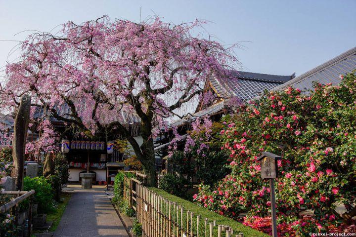 Jizo-in Temple (Tsubaki Temple)