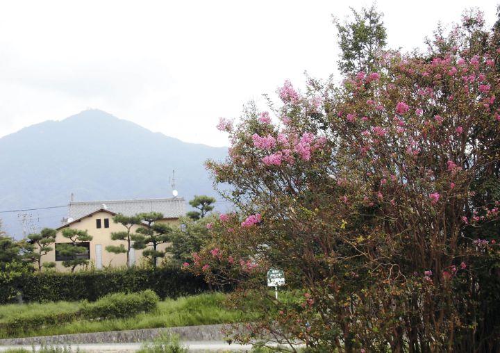 出雲路橋の桜