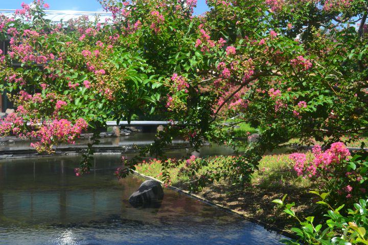 梅小路公園(朱雀の庭)の桜