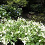 アサヒビール大山崎山荘美術館の桜