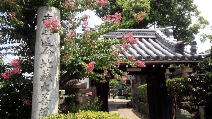 浄禅寺(鳥羽地蔵)の桜