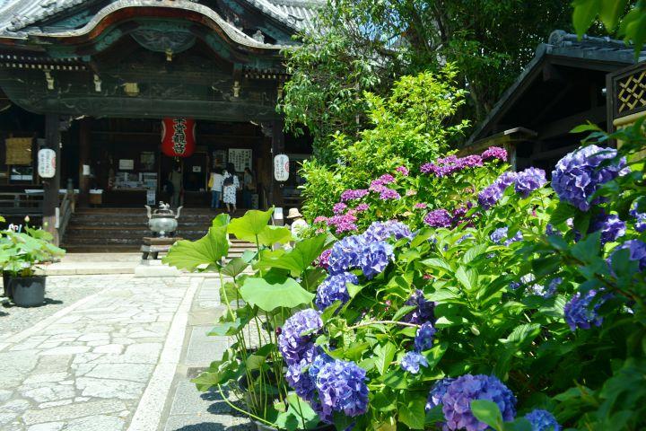 革堂(行願寺)の桜