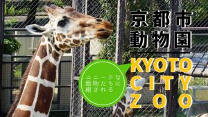 日々の疲れを動物たちに癒されたい…京都市動物園でユニークな動物たちと触れ合おう!